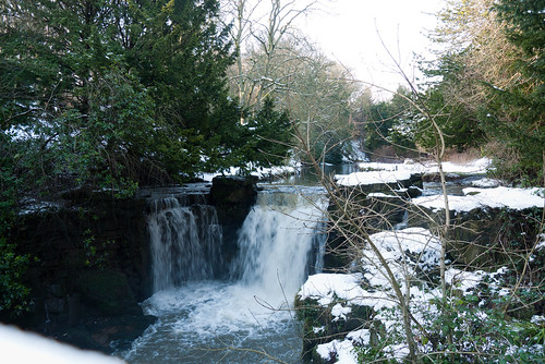 Winter 2013 (Jesmond Dene)  (12) | by Howard.