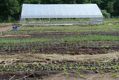 Long Lane Farm