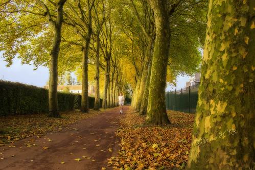 autumn nederland thenetherlands dordrecht runner jogger ortoneffect fallscenics autumnscenics inspiringcreativeminds stevebikolanedordrecht