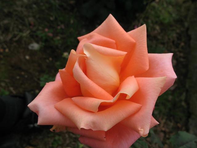 Lijepa kao ljubav