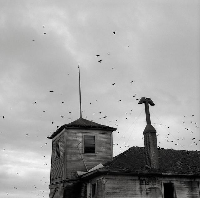 Abandoned Schoolhouse with Crows, Kinton, Oregon