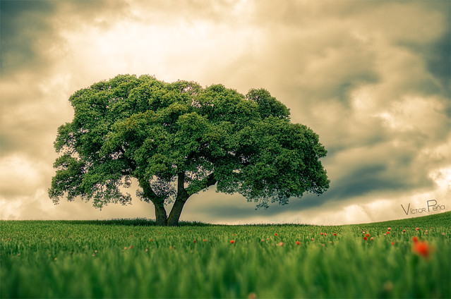 The Tree of our Games. - Disponible en Getty Images -