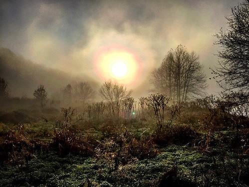 jamesriverstatepark sunrise fog sky plant trees hills artistic outdoor mist