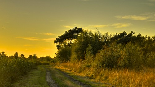 trees light sunset sky sun colour green art nature sunshine yellow backlight forest germany landscape outdoors deutschland evening landscapes photo woods nikon outdoor dream unfound fields serene pastoral moor venn wald moorland bentheim landroad nikond600