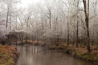 Late Winter in East Texas | by Kyle L.E.