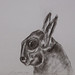 """Cabeça de Lebre!?""./""Hare head!?"". Carvão sobre papel/Charcoal on paper, 1988."