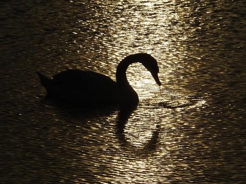 county ireland sunset sea dublin irish sun bird swan estuary explore setting swords dub malahide in inexplore
