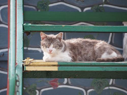 Cats of Sevastopol | by Fizzik.LJ