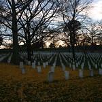 Leaves in Arlington Cemetary