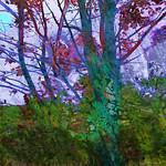 The Turquoise Tree