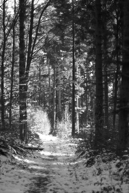A winter's tale and mElodie... un conte de l'hiver avec une mElodie ...?