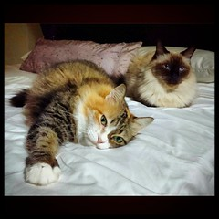 Lying together peacefully... until the damn photographer notices!!