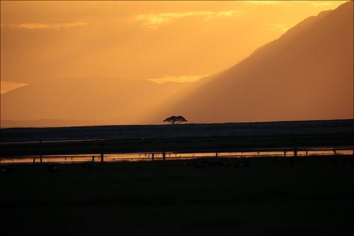 africa sunset orange fog landscape kenya paysage brume coucherdesoleil afrique amboseli riftvalley amboselinationalpark canonef400mmf28lisusm canonefextender2xii canoneos5dmarkii
