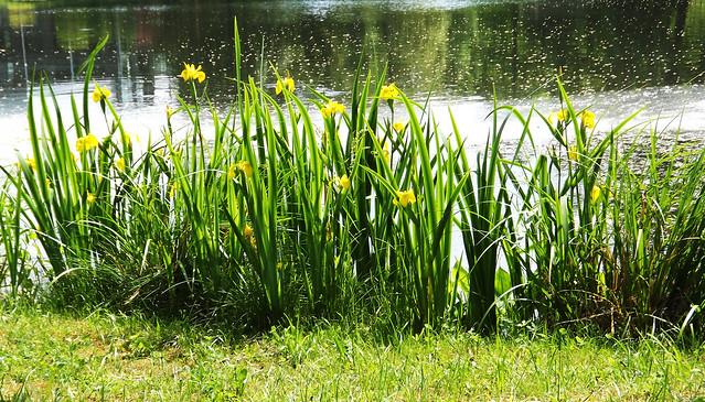 June Flowers(05)