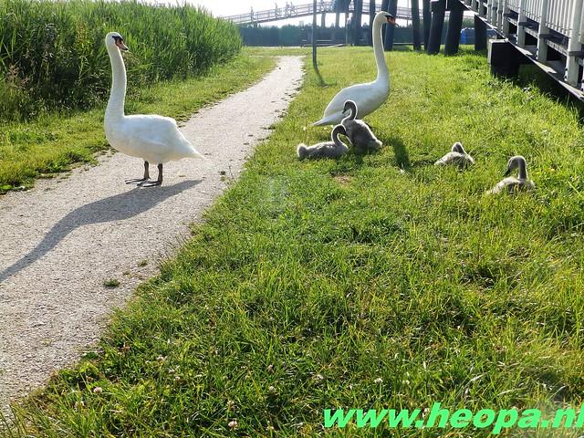 2016-06-16 2e dag Plus Wandel 4 Daagse Almaar 26 Km (18)
