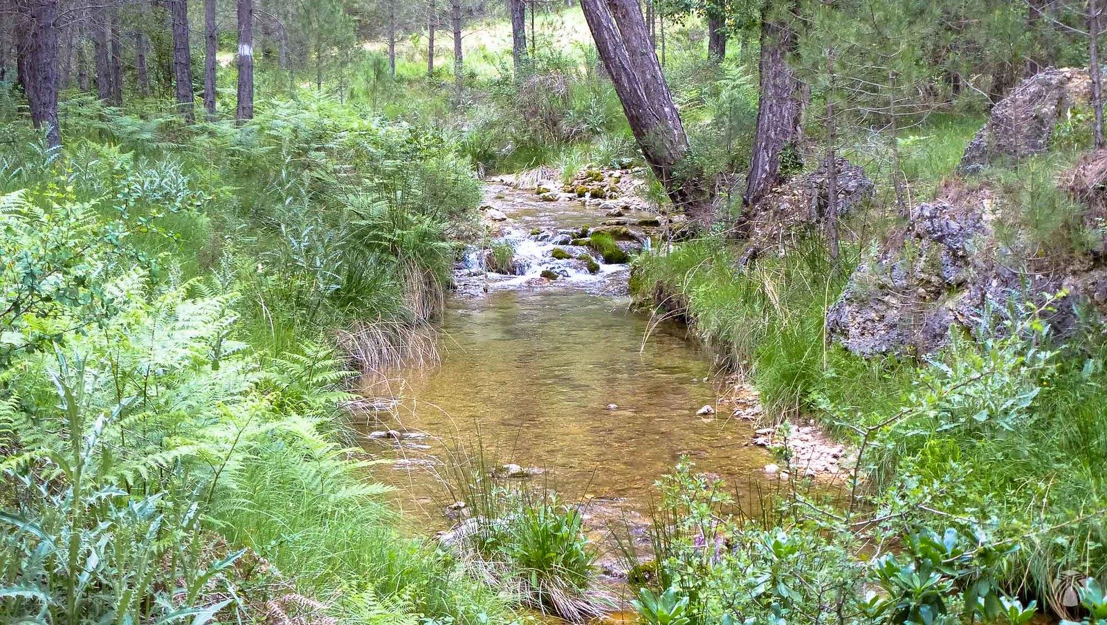 Un río escénico