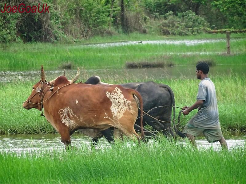 Farming - Ploughing