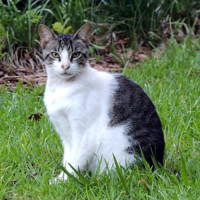 Willamette Road Cat -:- 3487
