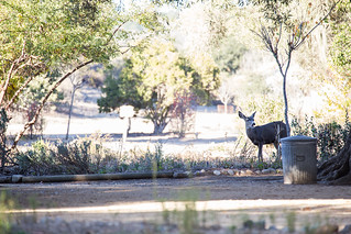 Deer at the Mission | by staticantics