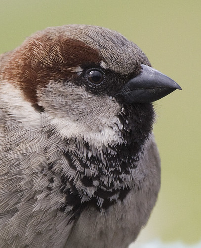 Birds in Bergen