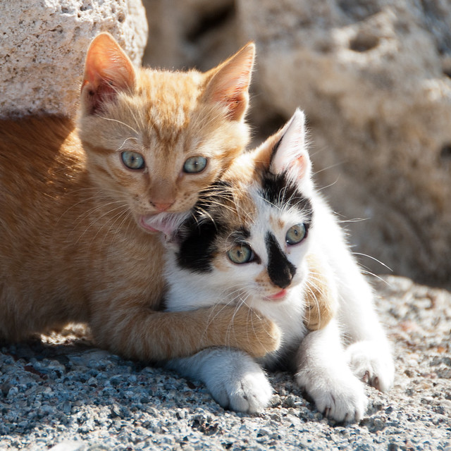 Cute kittens, Rhodes.