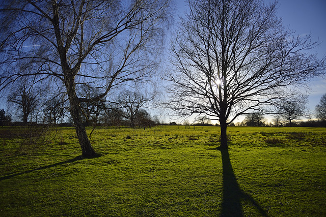 SUNLIGHT THROUGH BRANCHES  -  (Selected by GETTY IMAGES)
