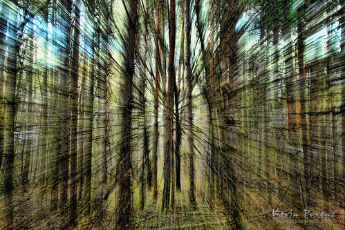 park wood blue trees light green forest woods focus kevin may cottonwoodpark 2013 povenz