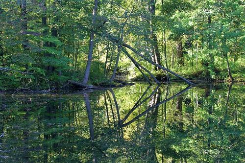 trees reflection green forest landscape pond woods michigan stonycreek stonycreekmetropark earlyautumn canon60d canon55250lens jannagal jannagalski michiganscene
