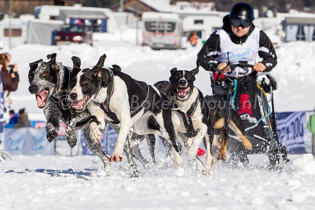 Schlittenhunderennen Inzell 2014