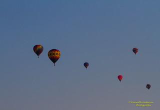 Balloons Over Paradise Festival-9090.jpg