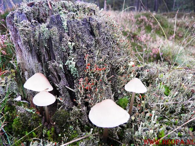 20-10-2012     Wedeblick-   Driebergen        25 Km (30)