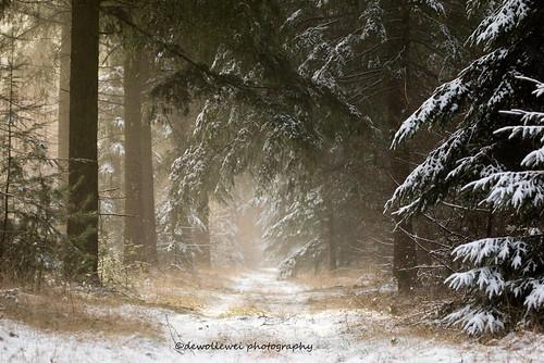 trees winter snow canon landscape overijssel landschap ommen junne vechtdal landschapoverijssel overijsselsvechtdal vechtdaloverijssel canon7dmark2 gemeenteommenhardenberg