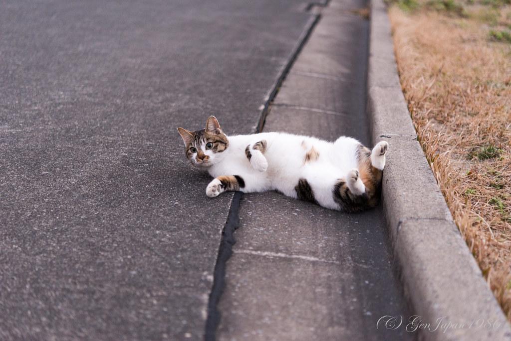 式根島 ネコ