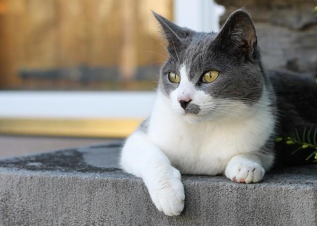 Neighbor Kitty 2