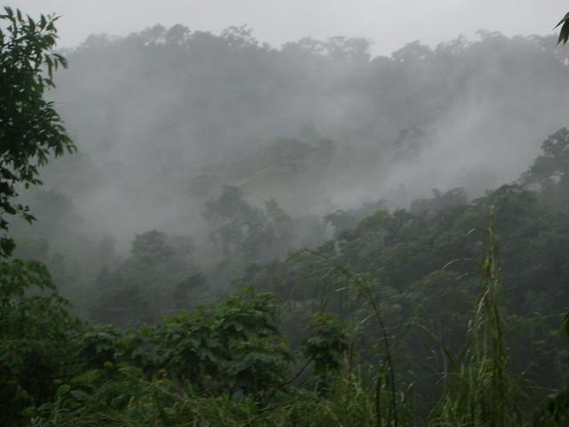 PC170067 Jungle in rain