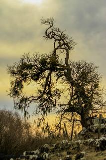 Dr. Suess Trees at Tolay Lake Regional Park