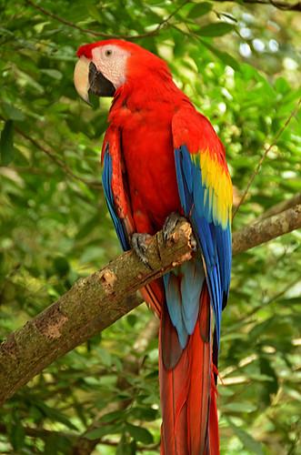 Gumbalimba Park -Kathy-09 | by KathyCat102