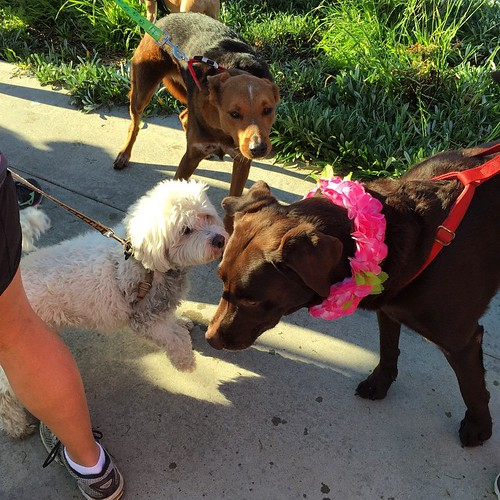 Good times! Canine chaos at the starting line. #PawsFurPink