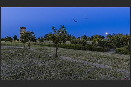 alberi torre luna notte giardino verginese