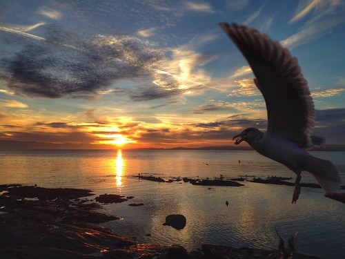 ocean sunset sea sky cloud sun reflection water bc pacific britishcolumbia seagull gull wing victoria vancouverisland yyj cloverpoint