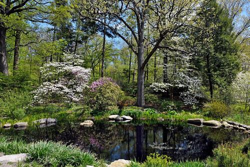newyorkcity newyorkbotanicalgarden nycparks landcsape alpinerockgarden nybgforest