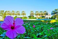 Front gardens at Grand Lucayan Resort 11/30/2015 #freeportbahamas #freeport #grandlucayan #grandlucayanresort #grandbahamaisland #lucaya #lucayabeach #bahamasvacation #bahamas #thebahamas #caribbean #nature #junkanoo #palmtrees