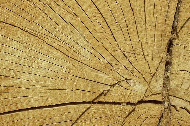 Holz Anschnitt Cl2