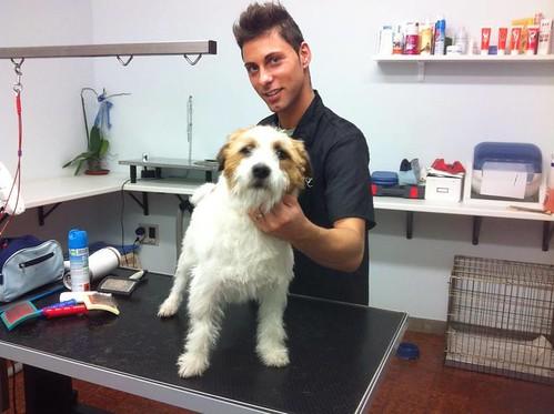 Remo | by wellnessdog