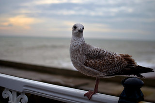 Sea gull | by nic_r