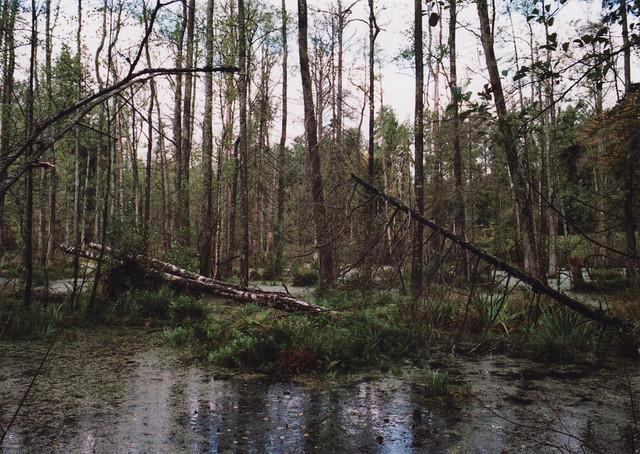 Poland - Swamp