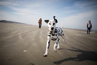 Proud to be a dog, belgian seaside, Belgium