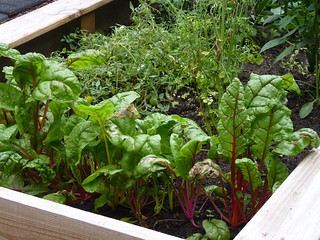 raised bed vegetable garden   by normanack