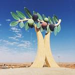 Zallom north of Aljouf, Saudi Arabia. Aljouf region is famous for its olives زلوم شمال الجوف. تشتهر الجوف بزراعة الزيتون #zallom #aljouf #saudi #arabia #olives #travel #iphone #vscocam