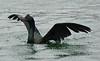 pelagic takeoff ps by bird behaving badly